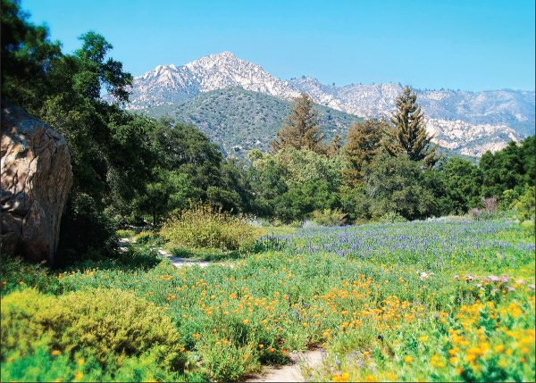 the meadow santa barbara botanic garden greeting card love from santa barbara - Santa Barbara Botanic Garden