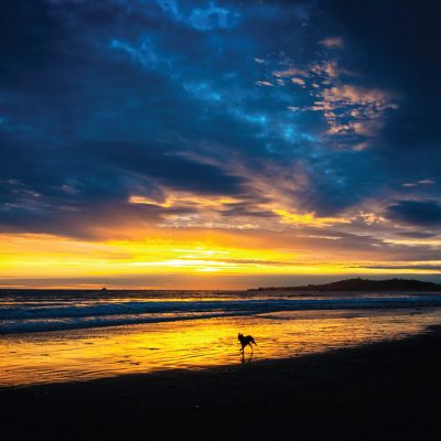 Dog in the surf, Butterfly Beach – Greeting Card