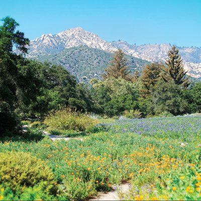 The Meadow, Santa Barbara Botanic Garden – Greeting Card