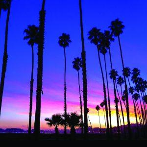 Palm Tree Sunset – Greeting Card