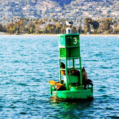 Sea lions on Green Buoy 3 – postcard