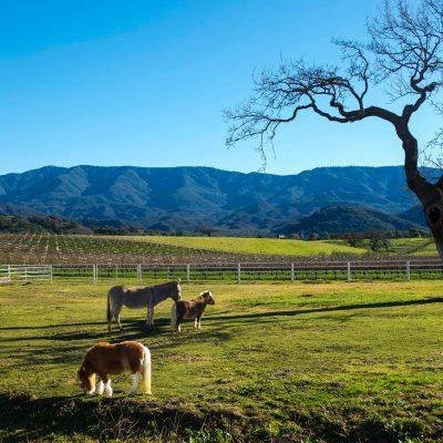 Santa Ynez Valley - Happy Canyon